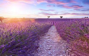 7 причин полюбить Прованс